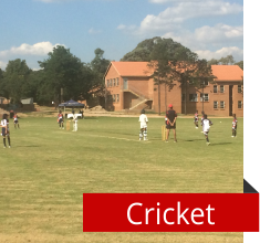 Carlswald Prep Cricket
